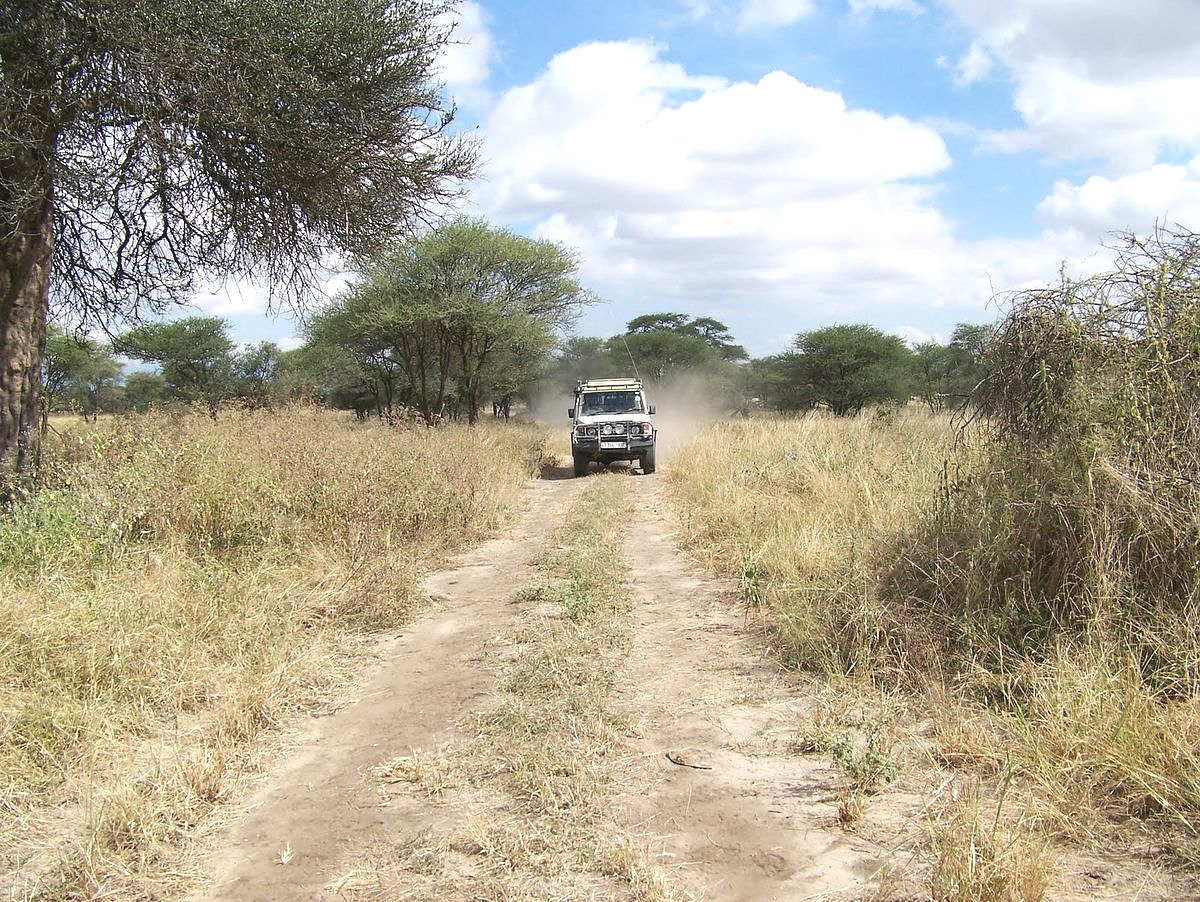 Game Drives Tarangire National Park in Tanzania