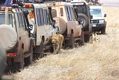 Game Drives in the Ngorongoro Crater