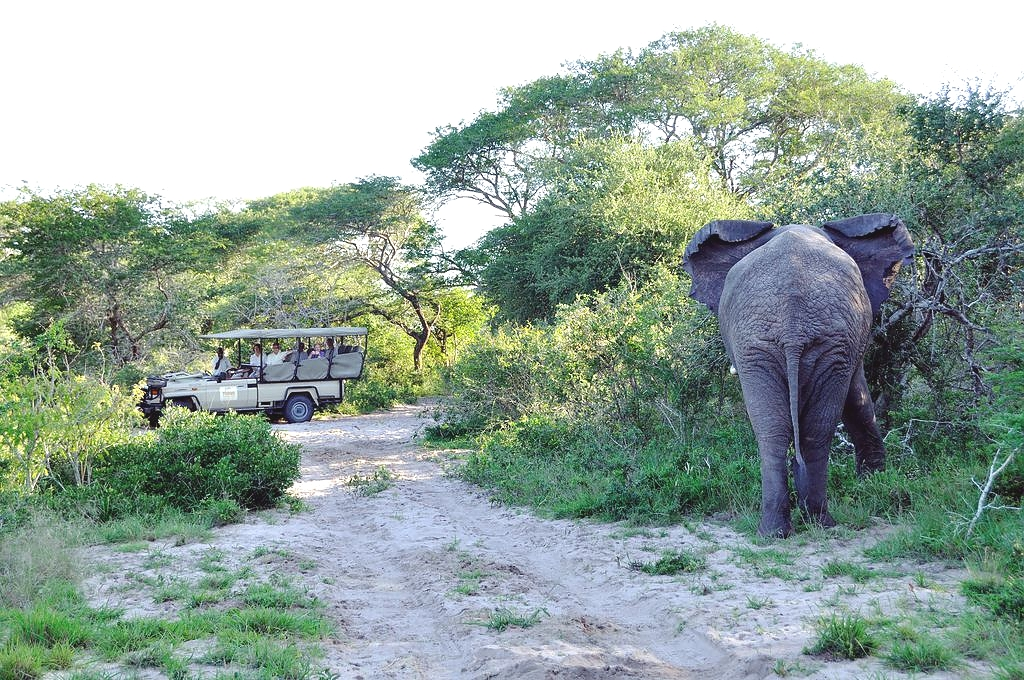 Game Drives in the Serengeti