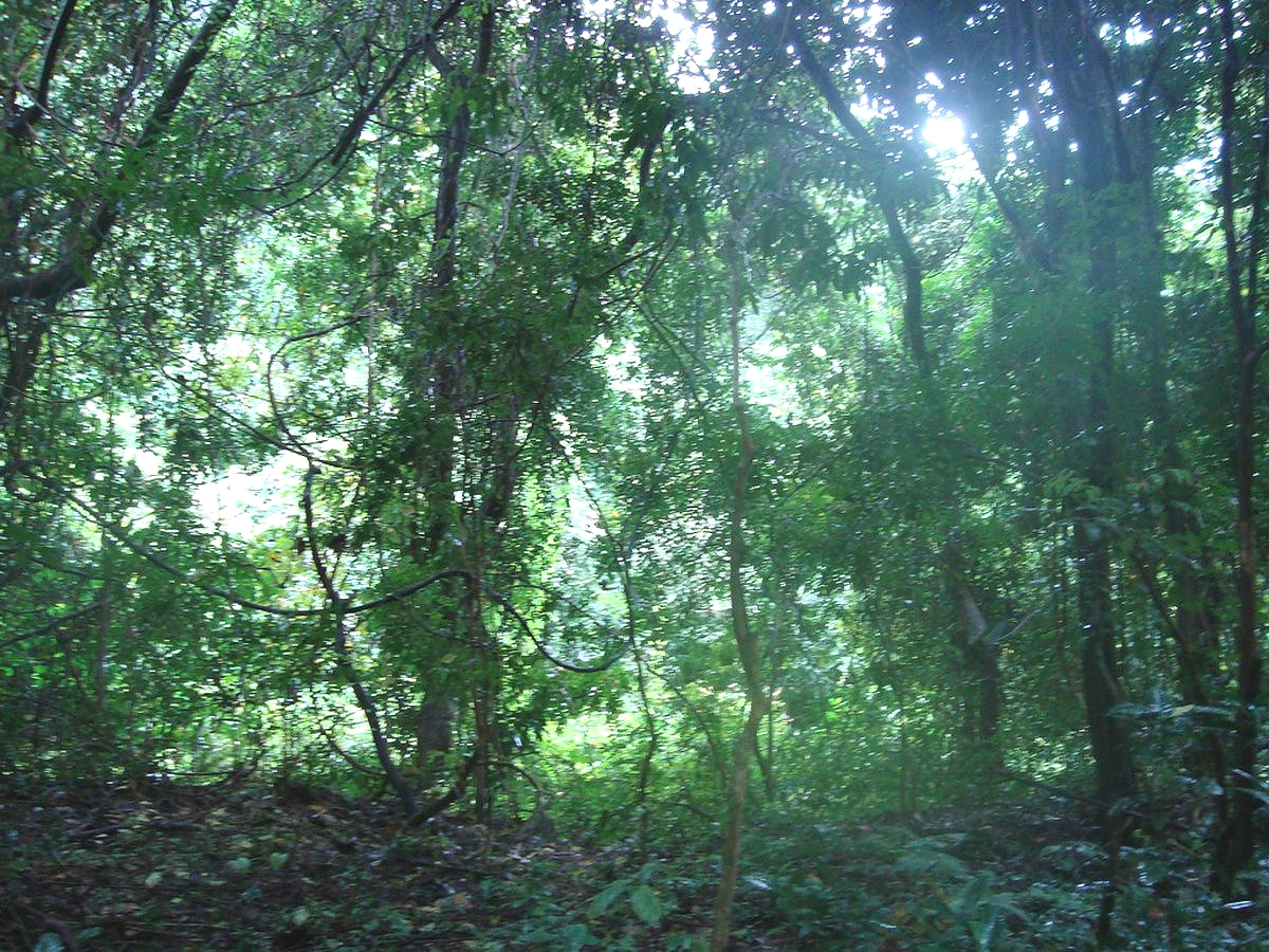Gombe Stream Forest