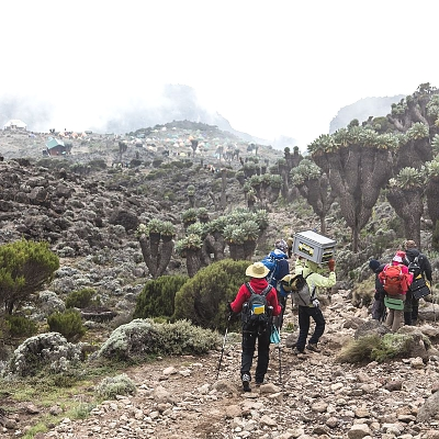 Lava Tower to Barranco Camp Mount Kilimanjaro National Park Rombo