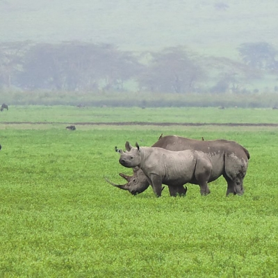 Rhinos in the Ngorongoro Crater